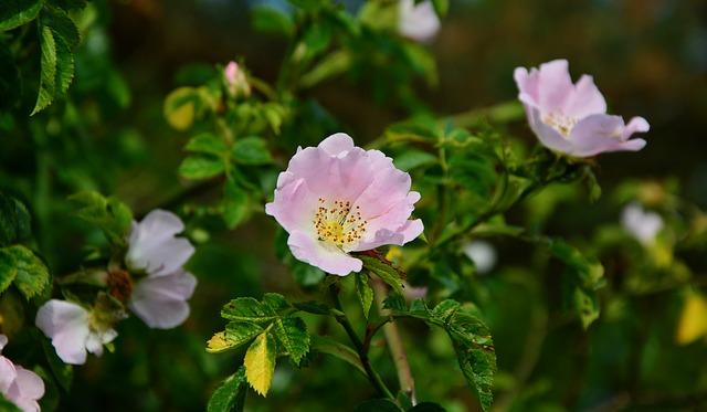 keř s květy.jpg