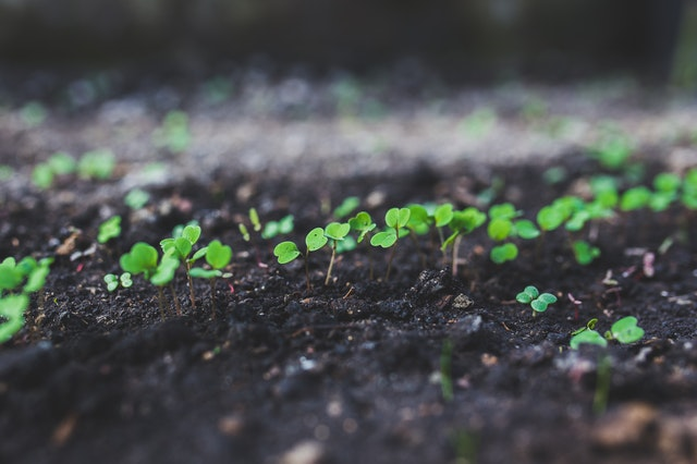 semenáče, ředkvičky, půda